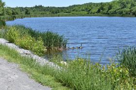 geese on trail.JPG